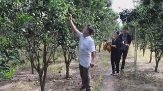 Phước Đông: Nông dân mạnh dạn chuyển đổi cơ cấu cây trồng