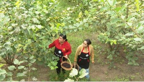 Thú vị trải nghiệm vườn dâu tằm