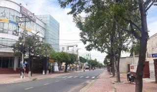 TP.Tây Ninh: Sẽ chỉnh trang hệ thống cây xanh trên nhiều tuyến đường