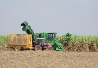 Vụ Hè Thu năm 2020: Đã xuống giống trên 65.700 ha