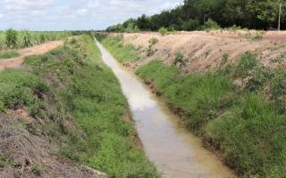 Phòng chống ngập úng cho vùng mía nguyên liệu trong mùa mưa