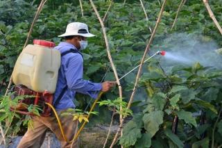 Nông dân ngày càng ý thức hơn trong sử dụng thuốc bảo vệ thực vật
