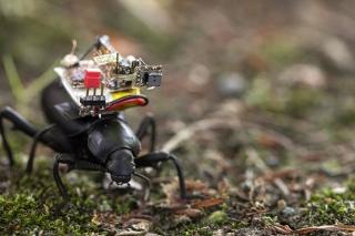 Bọ cánh cứng 'cõng camera' khám phá thế giới