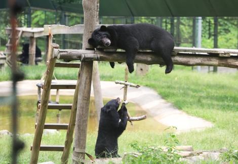 Dừng nhập khẩu động vật hoang dã
