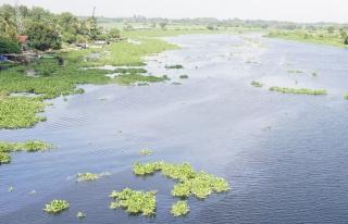 Vì sao sông Vàm Cỏ Đông ô nhiễm?
