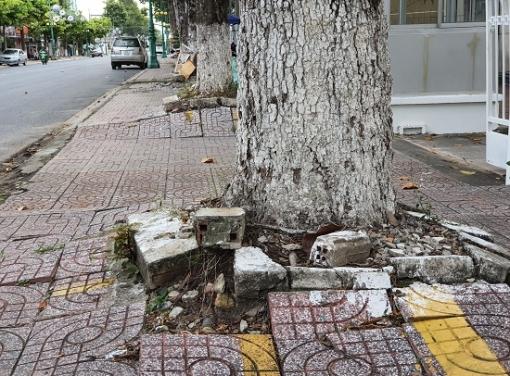 Cần có giải pháp phát triển lâu dài cây xanh đô thị