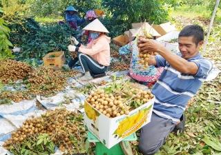 """Tây Ninh: Triển khai chương trình """"Mỗi xã một sản phẩm"""""""