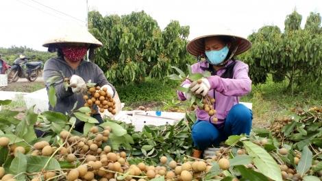 OCOP- Động lực phát triển kinh tế nông thôn