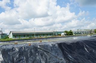 Công ty chế biến mủ cao su gây ô nhiễm môi trường