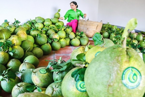 """Cần """"nâng cấp"""" toàn diện sản phẩm trái cây"""