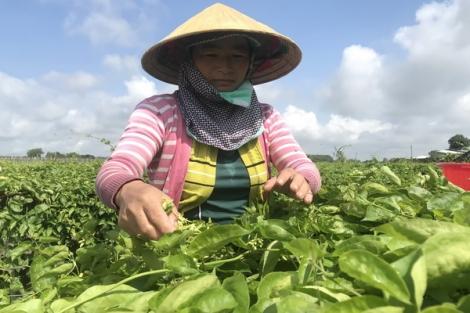 Hội Nông dân xã Long Thuận: Tích cực giúp hội viên phát triển kinh tế