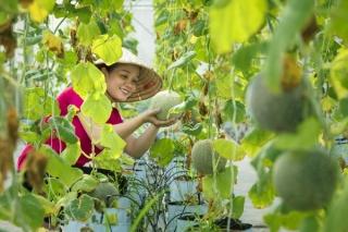 Khuyến khích đầu tư, sản xuất nông nghiệp hữu cơ