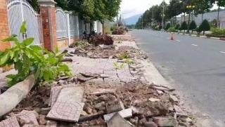 TP.Tây Ninh: Triển khai Dự án chỉnh trang hệ thống cây xanh