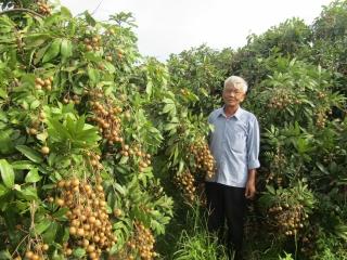 Chuyển đổi nhiều diện tích cây trồng kém hiệu quả sang cây ăn trái