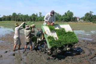Kỳ 1: Giải pháp phát triển nông sản bền vững