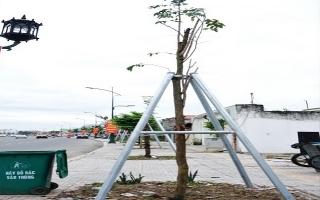 Đã trồng thay thế các cây xanh bị chết