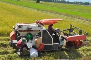 Bài 2: Hình thành vùng trồng lúa chất lượng cao