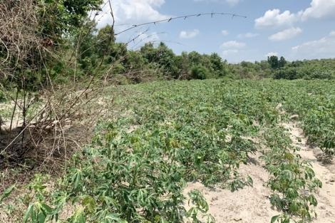 Đất rừng tự nhiên bị lấn chiếm Kỳ 1: Hồ sơ bị thất lạc, không xác định được người phá rừng