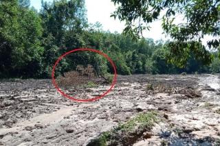 Đất rừng tự nhiên bị lấn chiếm Kỳ cuối: Vi phạm vẫn còn đó và... lan rộng