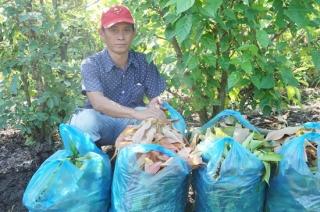 Nỗ lực xây dựng thương hiệu cho rau rừng Tây Ninh