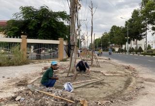Đẩy nhanh tiến độ trồng cây xanh trên một số tuyến đường