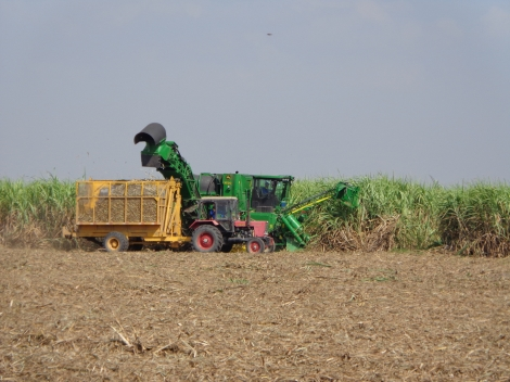 """Giá mía tăng, nông dân vẫn """"chưa hết lỗ"""""""