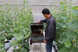 Tạo động lực để phát triển nông nghiệp ứng dụng công nghệ cao, nông nghiệp hữu cơ