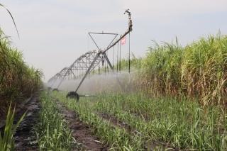 Hướng đến nền nông nghiệp thân thiện