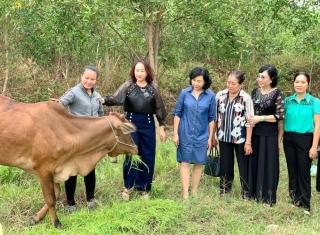 Trao bò sinh sản cho phụ nữ nghèo phường Long Thành Bắc
