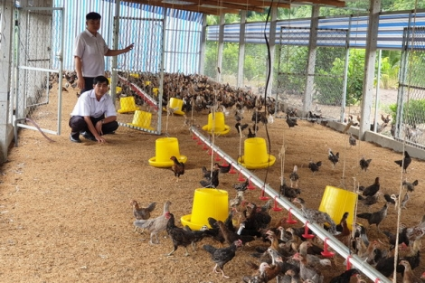 Xây dựng vùng chăn nuôi an toàn dịch bệnh: Hướng phát triển bền vững