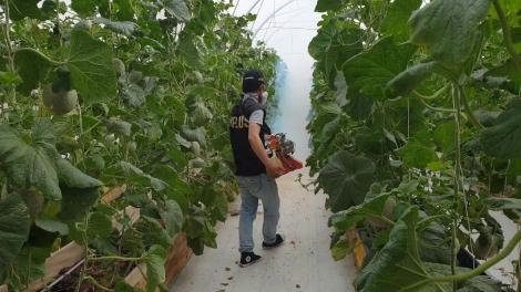 Trình diễn phương pháp xông khói diệt côn trùng trong nhà kính