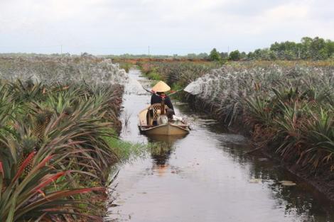 Dự kiến chuyển đổi cơ cấu cây trồng gần 11.500 ha
