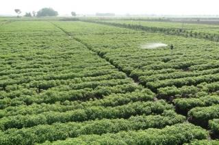 Tìm hướng phát triển bền vững cho cây dược liệu
