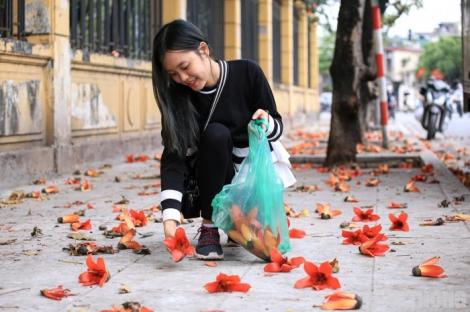 Người Hà Nội mê mẩn với sắc thắm hoa gạo tháng 3