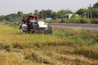 Trình diễn máy gặt đập liên hợp YH850 Yanmar