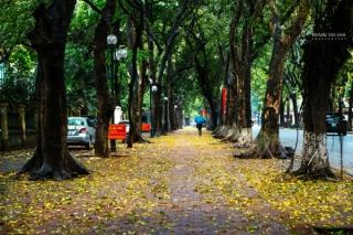 Hà Nội mùa lá sấu rụng - cảnh đẹp nên thơ