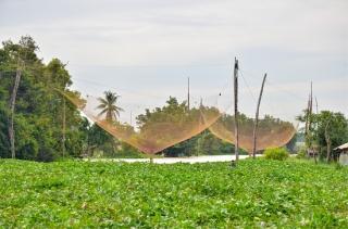 Cảnh báo bất lợi về môi trường đối với các hộ dân nuôi cá lồng, bè trên sông Vàm Cỏ Đông