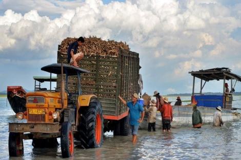 Làm gì để ngành công nghiệp chế biến khoai mì phát triển bền vững ?