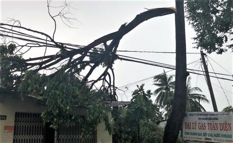 Dương Minh Châu: Mưa giông làm cây ngã đổ, gây hư hại nhiều nhà dân