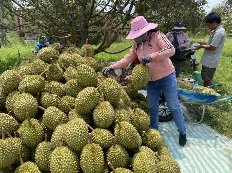 Nhiều loại trái cây tăng giá