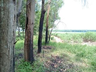 Trồng rừng theo mô hình đã được phê duyệt: Cần thực hiện nghiêm để tránh sự so bì