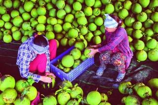 Để cây ăn trái phát triển bền vững