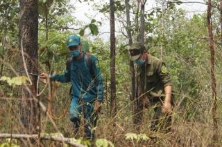 Còn nhiều khó khăn trong công tác bảo vệ và phát triển rừng