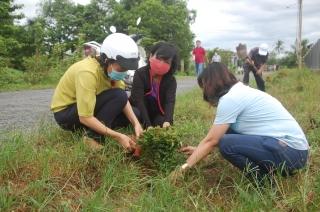 Hội LHPN xã Phước Thạnh: Ra quân thực hiện tuyến đường hoa