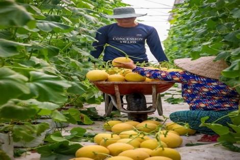 Sản xuất nông nghiệp hữu cơ: Nhiều thách thức