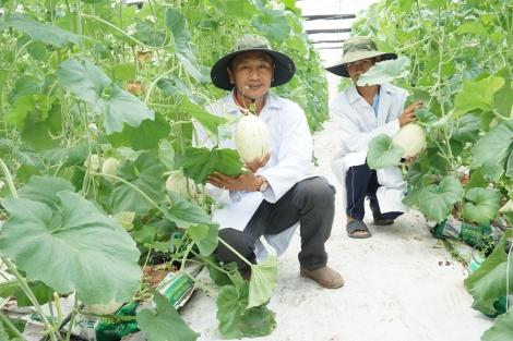 Giai đoạn 2019-2020: Tây Ninh có 67 dự án đầu tư vào lĩnh vực nông nghiệp