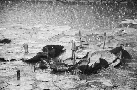 Trời mưa bong bóng...