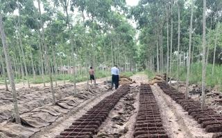 Sở Nông nghiệp và Phát triển nông thôn: Kiểm tra đột xuất việc thực hiện quy định pháp luật trong sản xuất nấm