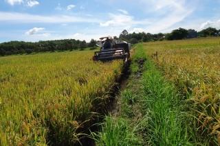 Mùa dịch, nông dân gặp khó