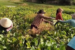 """""""Phiên chợ 0 đồng"""" với rau sạch lấy từ rừng, sông quê"""
